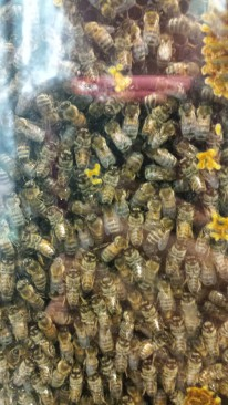 Bee Hive at the Museum of Natural History