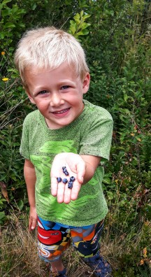 Wild Blueberries. YUM!
