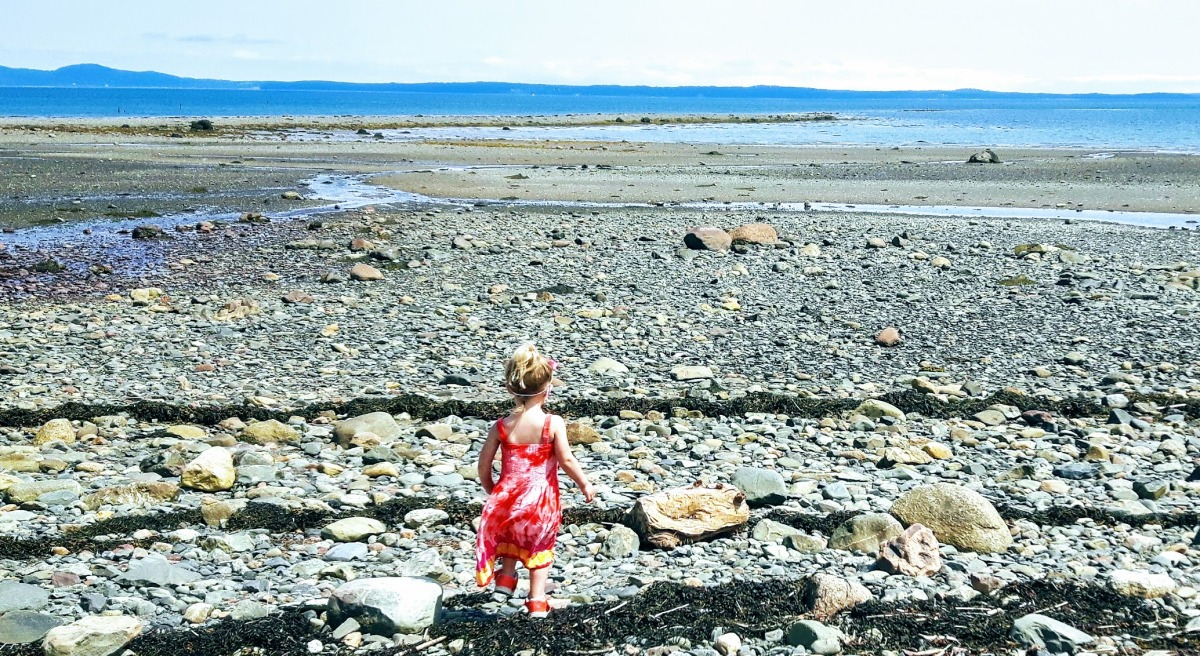St. Andrews, NB:  Starfish, Seals and Seaside Fun!