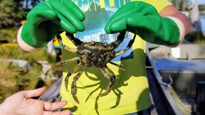 sm holding crab